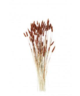 Roślina suszona Lagurus ovatus