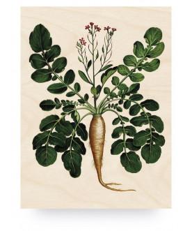 Obraz Botanical Root Plant,...