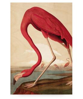 Obraz Flamingo, KEK Amsterdam