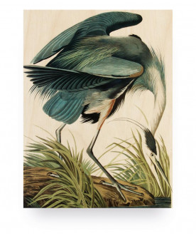 Obraz Reiger/Heron in gras,...
