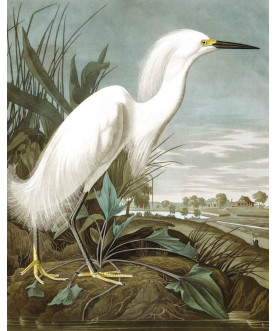 Tapeta Panel Snowy Heron,...