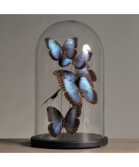 Klosz z motylami Morfos bleus