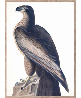 Ptaszor Bird of Washington