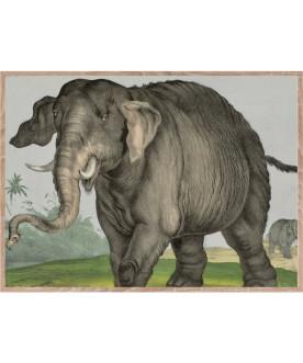 Słoń jeden