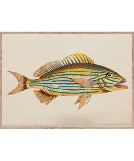 Ryba w paski