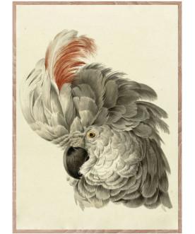 Papuga jedna