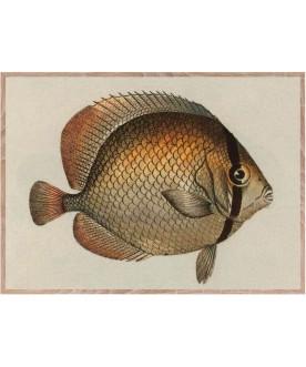 Złota rybka 30x 40 cm