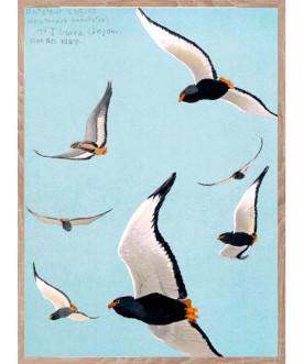 Ptaszor Bateleur Eagle White