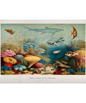 Obraz na drewnie Fish