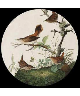 Przycisk do papieru, Audubon
